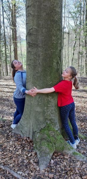 objem-drevesa